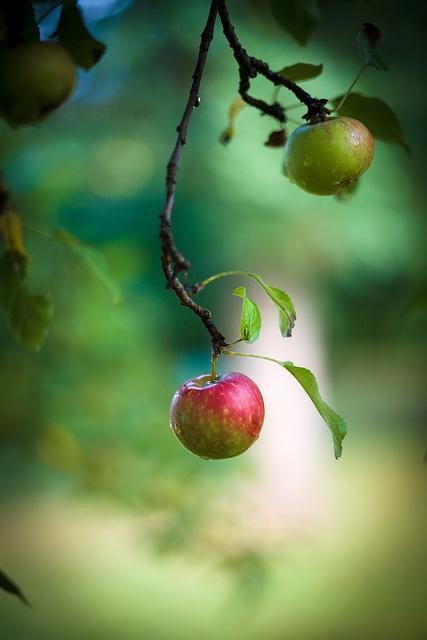 apple..