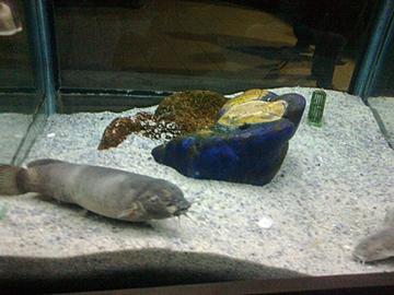 catfish! ;).jpg