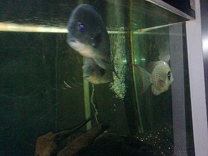 ikan 2.jpg