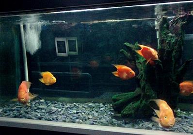 ikan warna warni...jpg