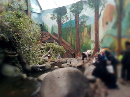 jungle dome.jpg