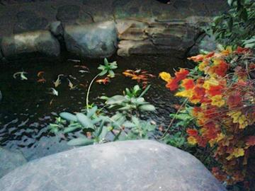 kolam ikan warna warnii.jpg