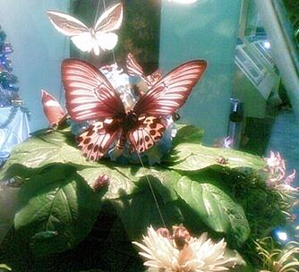 kupu kupu cantik....jpg