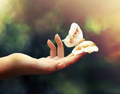 hand and butterfly