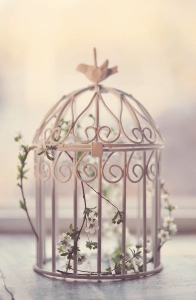 lovely cage
