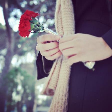 red rose.. for you..
