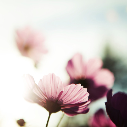fleurs~