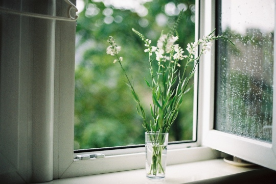 flower on the window