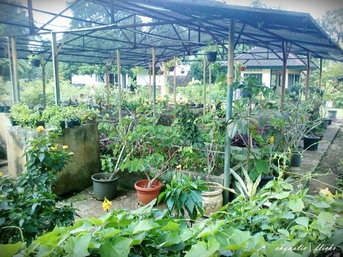 kebun bunga..