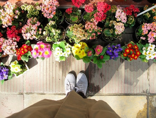 feet and flowers~