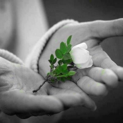 tiny white rose~