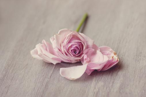 rose falling..