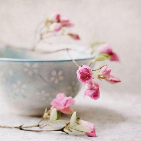 petal of roses