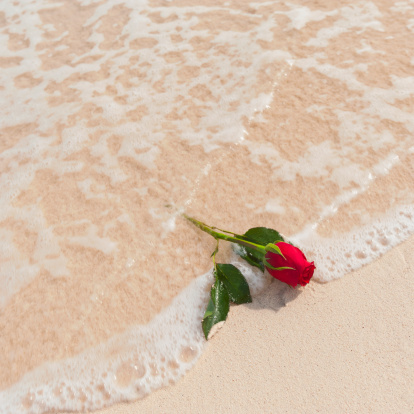rose in the sea