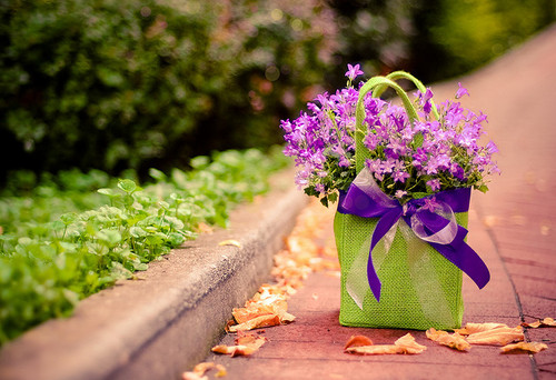 lovely bouquet of flowerss