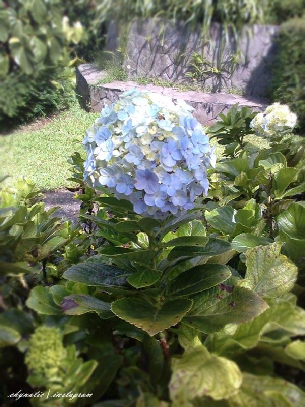 bunga yang cantik ^^