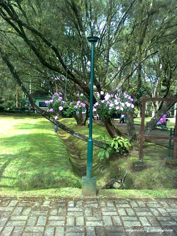 farewell, taman bunga..