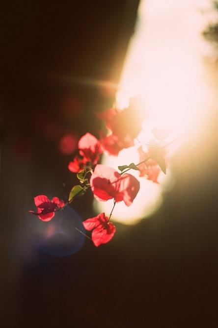 morning light (2)