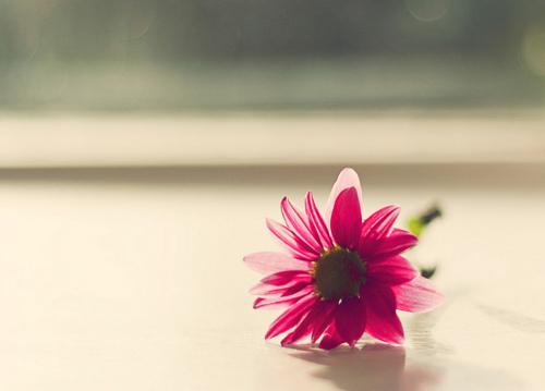 beautiful flower..