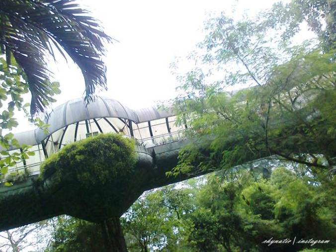jembatan berkanopi-pusat primata schmutzer