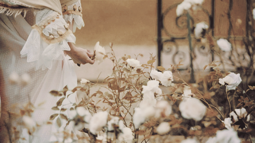 garden of white roses