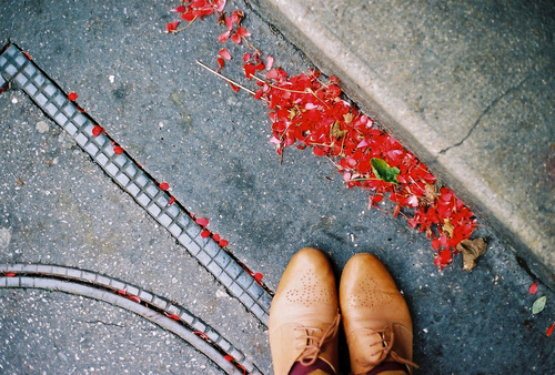 petals and shoes