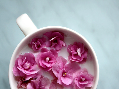 pink flowers in a cup