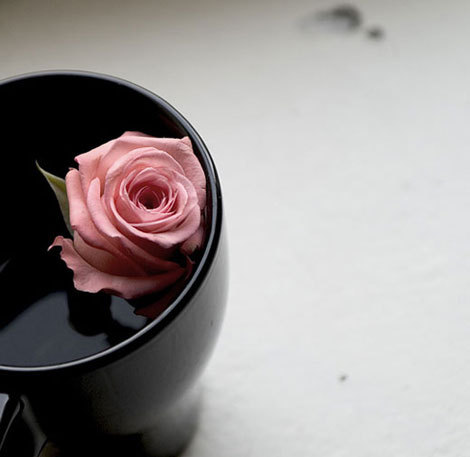peach rose..