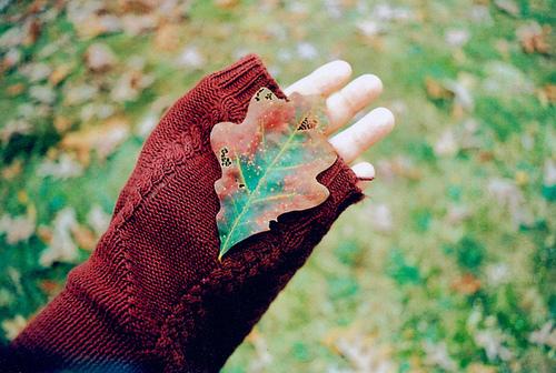 daun-yang-jatuh-tak-pernah-membenci-angin