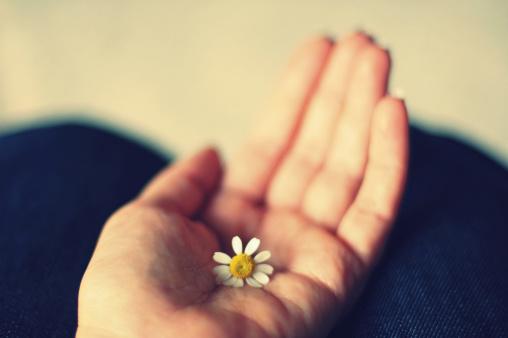 little-daisy